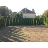 Smaragd tuja 140/150 cm